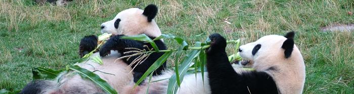 Google Panda apdejt