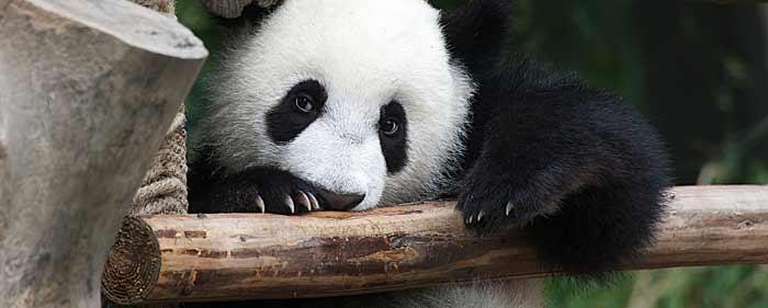 Panda apdejt zamenjuje Google PR