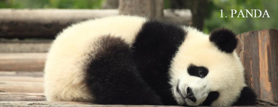 panda algoritam